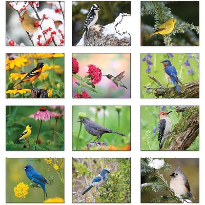Backyard Birds 2021 Calendar Monthly Scenes