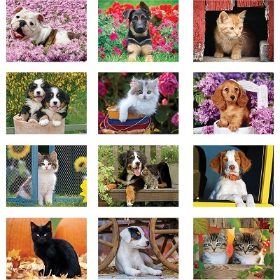 Puppies and Kittens 2021 Calendar Monthly Scenes