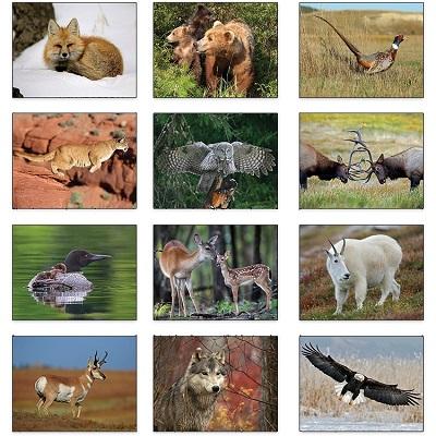 Wildlife 2021 Calendar Monthly Scenes